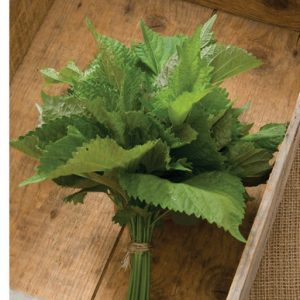 Green Shiso | Herb Seed